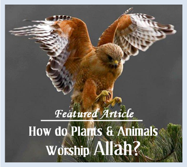 Do Plants, Animals & Insects Worship Allah? What Happens to them in the Hereafter?